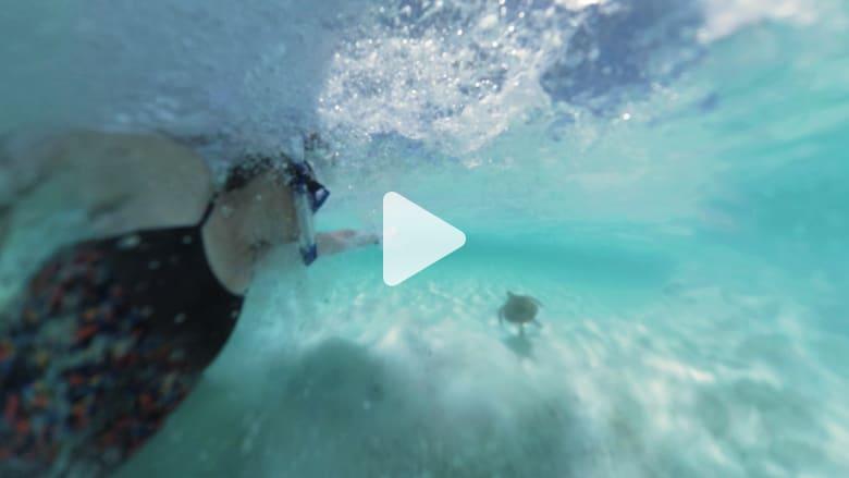 تجربة العمر.. السباحة مع السلاحف البحرية في جزر البهاما