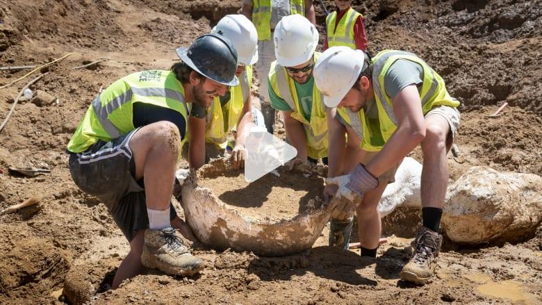 اكتشاف عظام ديناصور تعود إلى 68 مليون عام.. شاهد حجمها
