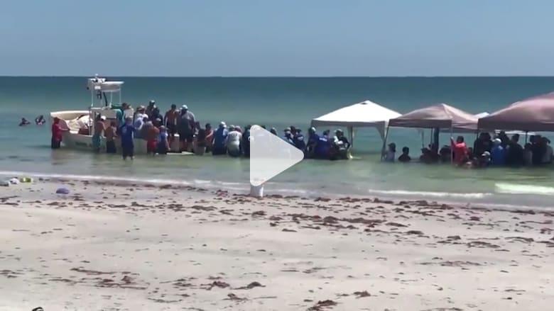 مصطافون ينقذون 5 حيتان طيارة على شاطئ بفلوريدا