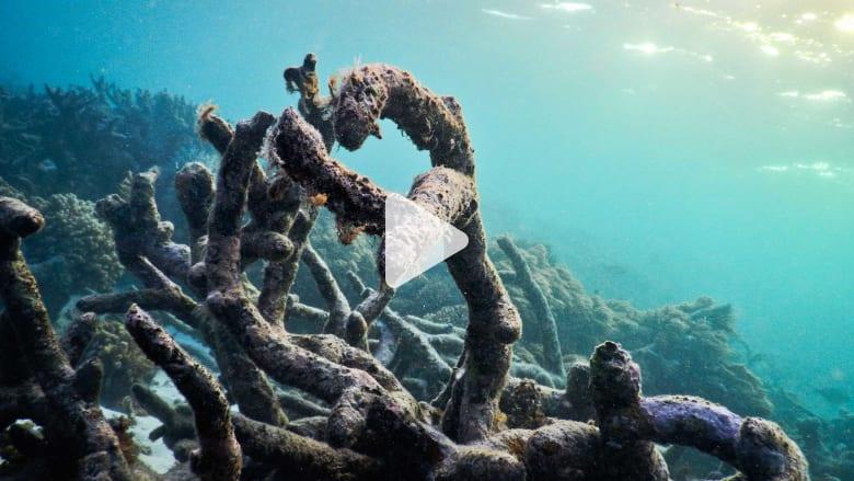 الحاجز المرجاني العظيم الأكثر تضرراً في التاريخ