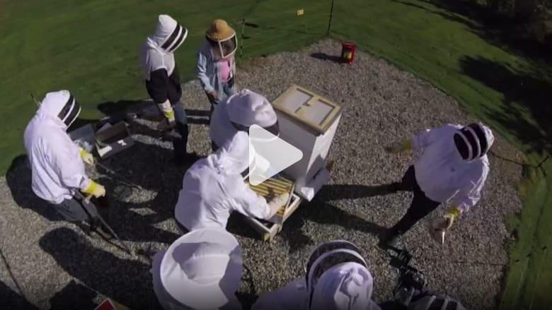 دراسة تكشف عن تغيُّر غريب في سلوك النحل بسبب مبيد حشري شائع