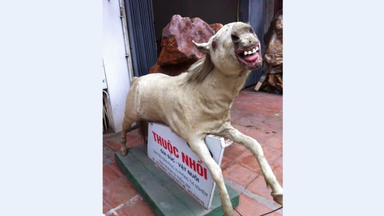 فن الحيوانات المحنطة.. ممتع أم مخيف؟ القرار يعود لكم