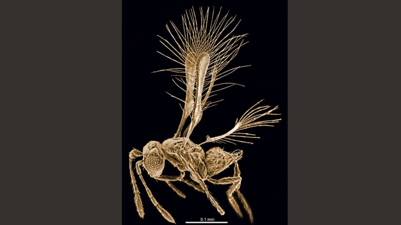 شاهدوا أغرب 10 فصائل لمخلوقات اكتشفت خلال عام 2014