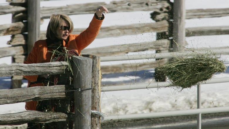 الشخصية التلفزيونية الأمريكية ،مارثا ستيوارت، تمتلك اسطبل خيول وتعتني بها بنفسها. وهذه بعض الأكلات التي يجب على الحصان الصحي أكلها، ولا سيما الأحصنة التي تشارك بالمسابقات.