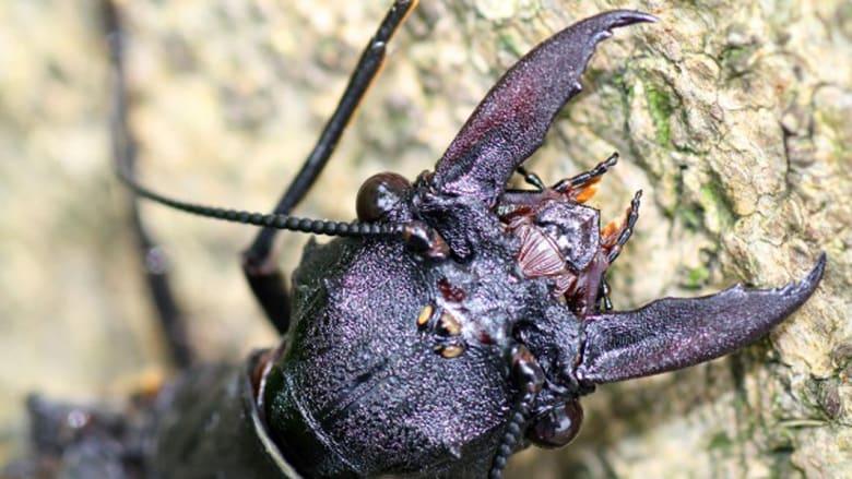 حشرة مائية تشبه اليعسوب