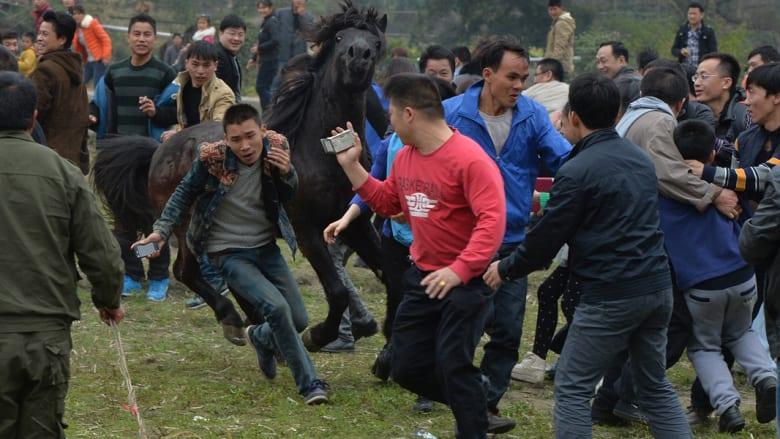 هكذا تتقاتل الفحول في الصين