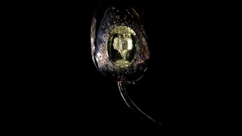 كيف ظهر وجه إنسان في هذا الحجر الكريم؟