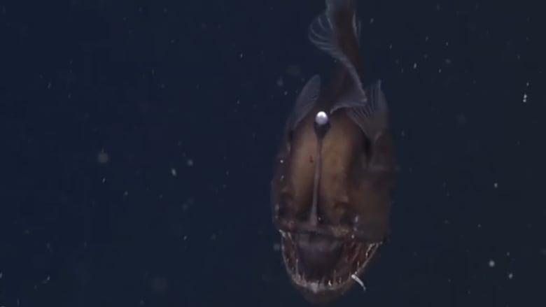 صورة للسمكة