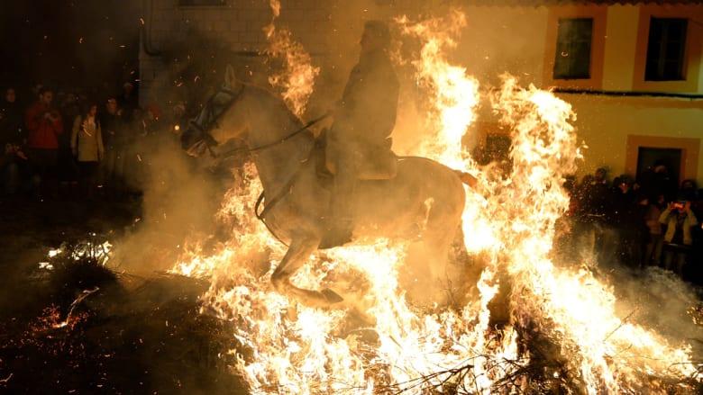بالصور..هكذا تعانق الخيول النيران الملتهبة في اسبانيا