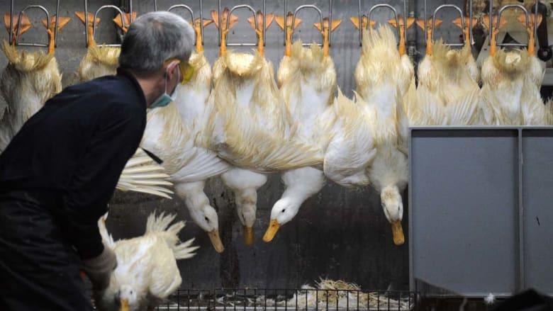 ظهور أول حالة انفلونزا طيور يعتقد أنها عدوى من بشر في الصين