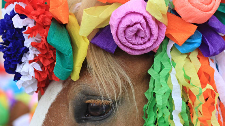 """بالصور..الخيول """"نجمة"""" المواكب الملكية في جمهورية التشيك"""