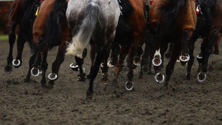 من كتائب فتح وصولاً إلى التشيك.. كيف بدأت أحصنة العالم عام 2015؟