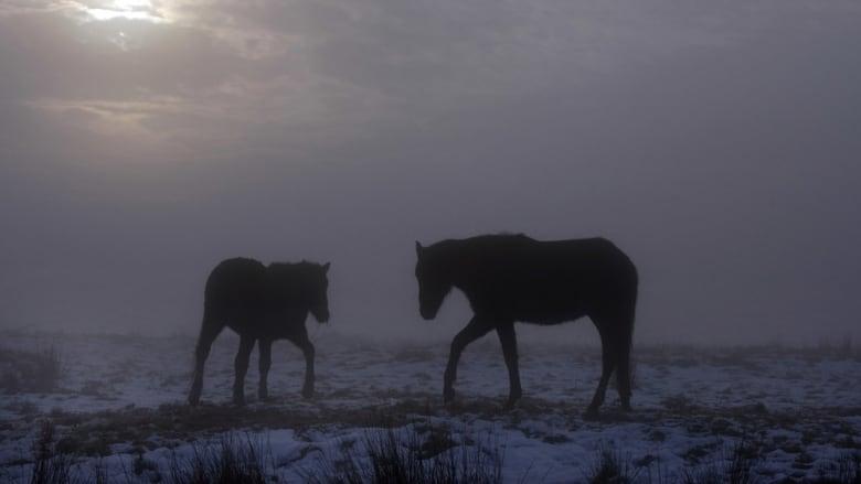 كيف عاشت الخيول موجة الصقيع الأخيرة؟