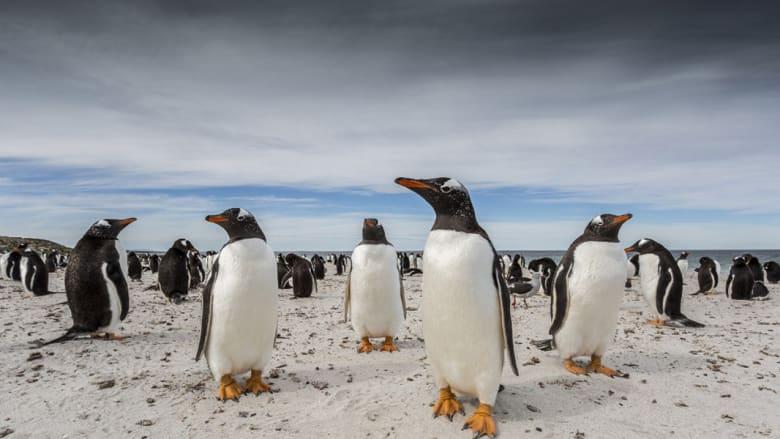 """""""ناشونال جيوغرافيك"""" تختار 6 صور نهائية لمسابقة المسافر عام 2015"""