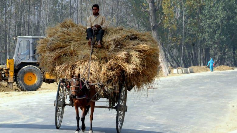 بالصور..ليس الصوف أهم ما يميز كشمير بل الخيول أيضاَ