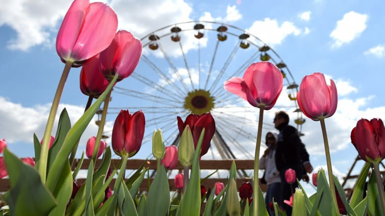 مظاهر الربيع بدت بتفتح الزهور في جنوب ألمانيا