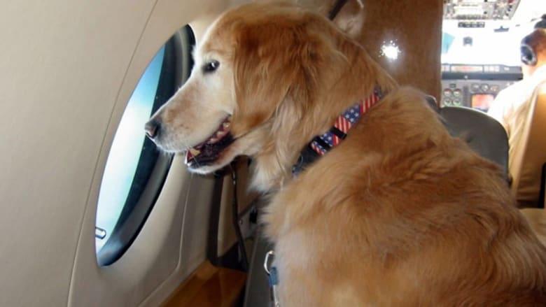 رفاهية مطلقة للحيوانات الأليفة على متن الطائرات