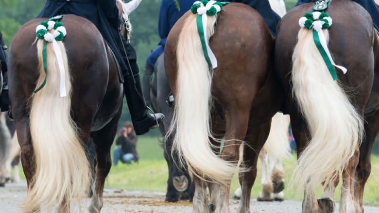بالصور..وللفقراء حقهم أيضاً من الخيول في ألمانيا