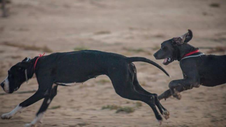 وللكلاب يوم نزهة في البحرين..فهل يتحقق حلم الناشطين بإنشاء منتزه خاص بالكلاب في المملكة؟