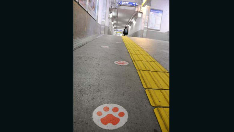اتبع علامات أقدام القطة الصفراء
