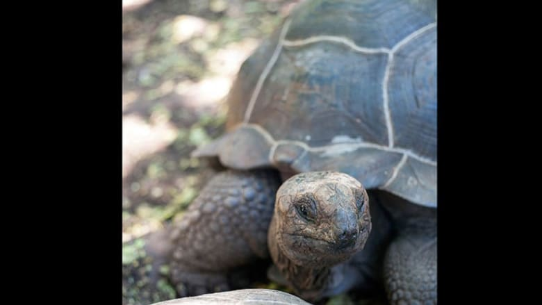 حماية السلاحف