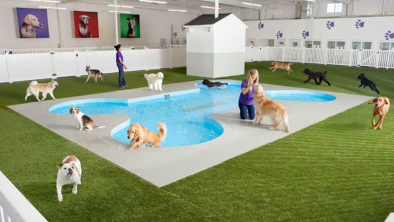 محطة مطار فاخرة ببركة سباحة وخدمة تدليك..الأولى من نوعها عالمياً للحيوانات فقط