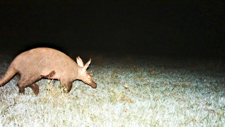 15 صورة سيلفي لحيوانات ستغير من نظرتكم لعالم الغاب