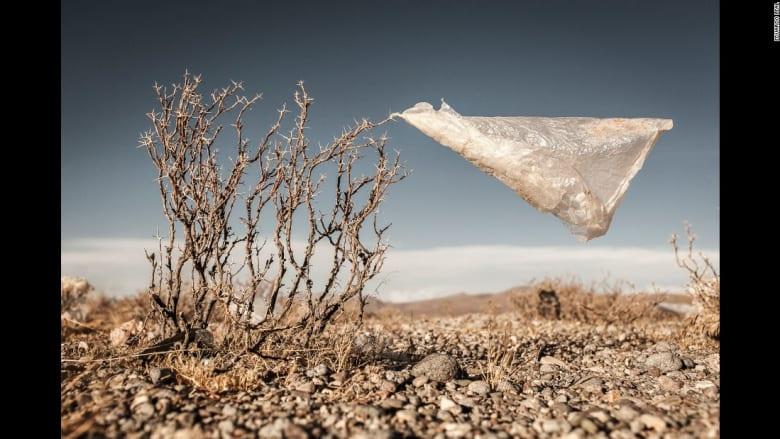 نظرة صغيرة لمشكلة بيئية كبيرة..عندما تعانق الأكياس البلاستيكية الطبيعة الأم