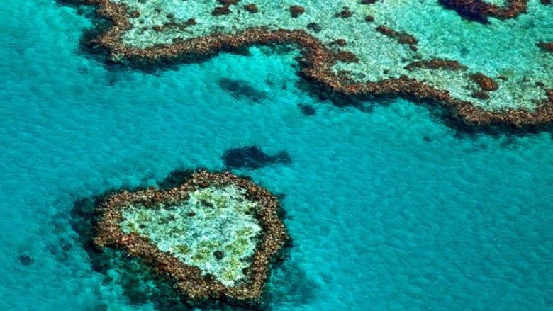 الحيد المرجاني العظيم، أستراليا