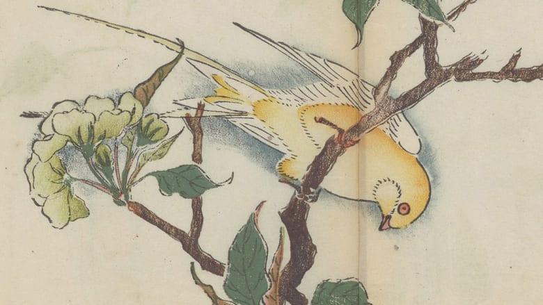 بالصور.. أقدم كتاب ملون في العالم