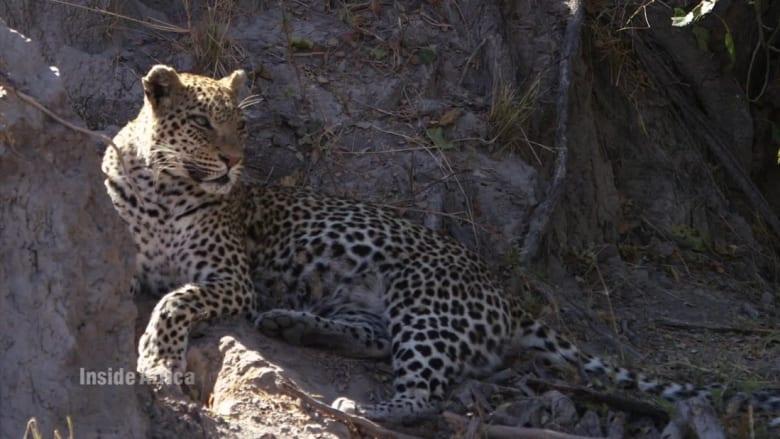 لعشاق السفاري والحيوانات البرية.. أهلا بكم في دلتا أوكافانغو