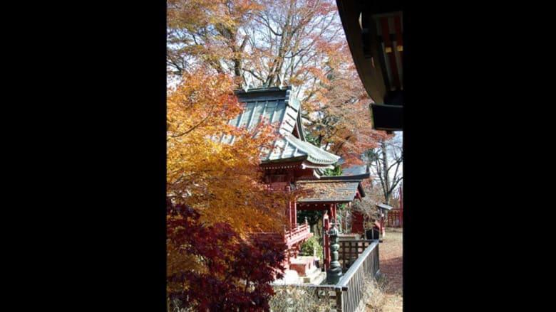 هذا الخريف.. أجمل الأماكن لمشاهدة طوكيو بأزهى الألوان