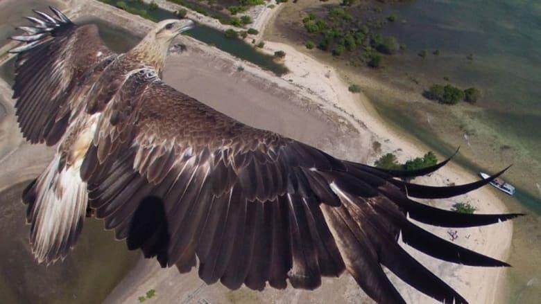 """هل تحلم برؤية العالم من وجهة نظر طائر؟ ننصحك بموقع """"درونستغرام"""""""