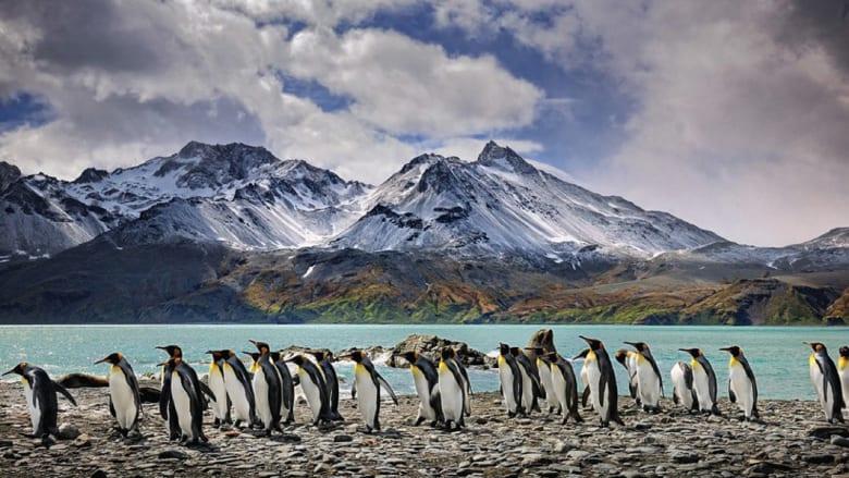 """الفقمة والحيتان والحبار..كائنات رائعة تعيش في آخر مكان """"سري"""" على وجه الأرض"""