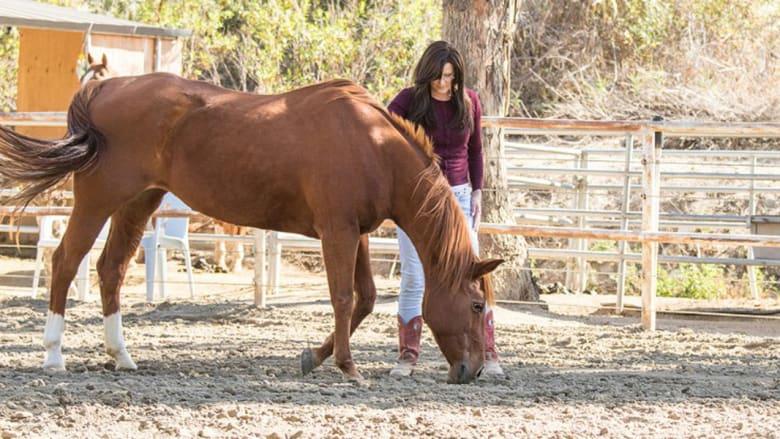 هكذا يصبح حصانك طبيبك النفسي...
