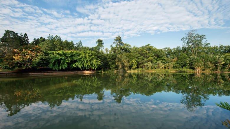 هل هذه أجمل حديقة استوائية في العالم؟ اكتشف ذلك