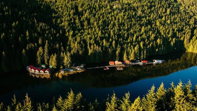 دببة بريّة وجبال جليدية وطعام شهي.. أكواخ فاخرة لإجازة مثالية في الغابات الكندية