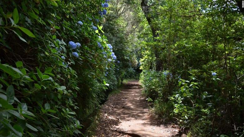 أهلا بكم في ماديرا... لؤلؤة البرتغال حيث لا ينتهي الربيع
