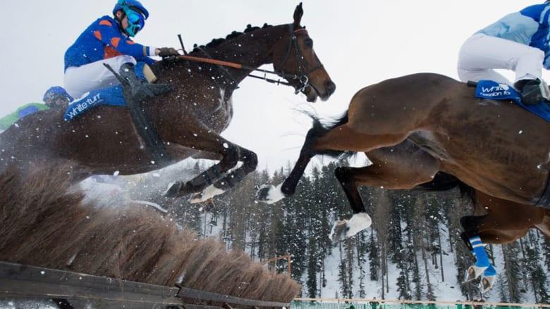 """سباقات """"العشب الأبيض"""".. حيث تتزين الأحصنة بحبيبات الثلج الكريستالية"""
