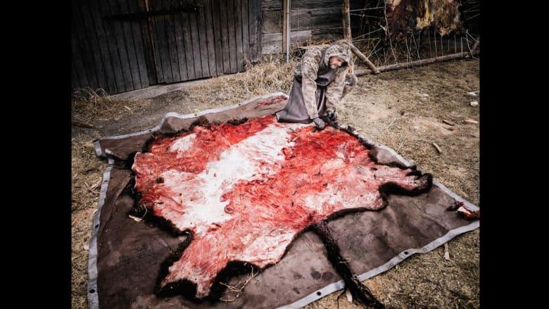 """هل تريدون معرفة طعم حياة """"الجزارين""""؟ إذا انضموا إلى استخراج أحشاء الجواميس في تلك الرقعة من الأرض"""