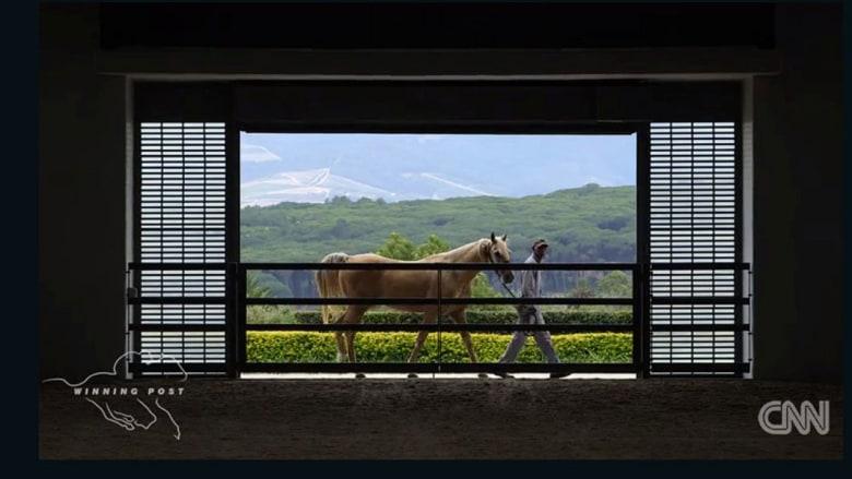 """تخيّل..هذه المزرعة الفاخرة """"جنة الخيول على الأرض"""""""