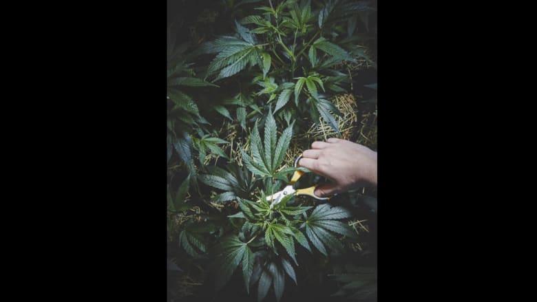 """هل هذه راهبة تدخن """"لفافة حشيش؟"""".. الماريجوانا تشق طريقها إلى عالم الراهبات"""