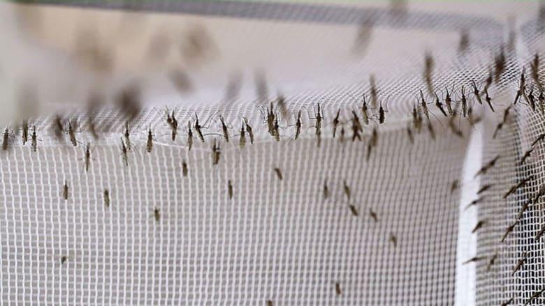 هل يوقف هذا الصابون فيروس زيكا؟