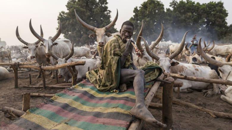 أفراد هذه القبيلة يموتون لتعيش أبقارهم.. في جنوب السودان