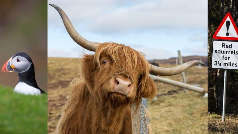 اسكتلندا هي الخيار..لعيش أجمل رحلة برية على الإطلاق!