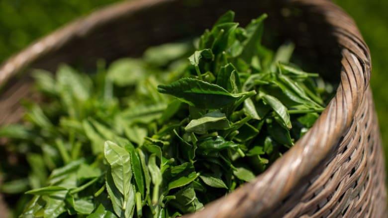 هل يمكن أن يحفز الشاي الأخضر قوة الدماغ؟