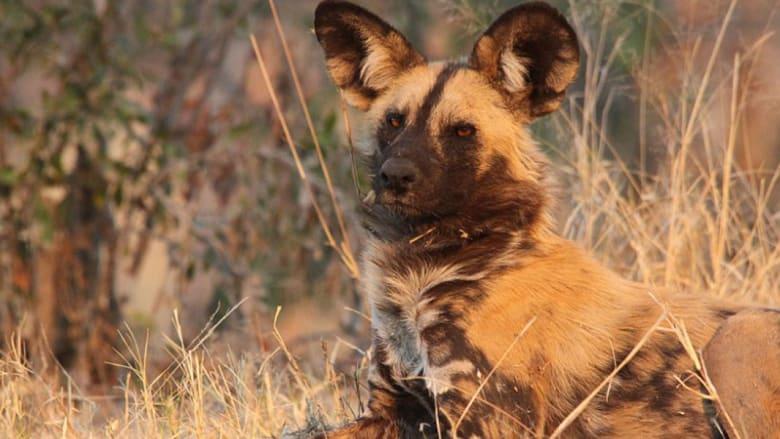 هل هذه أضخم محمية للحيوانات في العالم؟