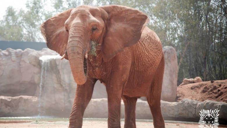 أنثى فيل تُلقي حجرًا على طفلة في حديقة الحيوانات بالرباط وتتسبّب في مصرعها