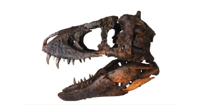 جمجمة ديناصور بـ1.8 مليون دولار.. هل تشتريها؟