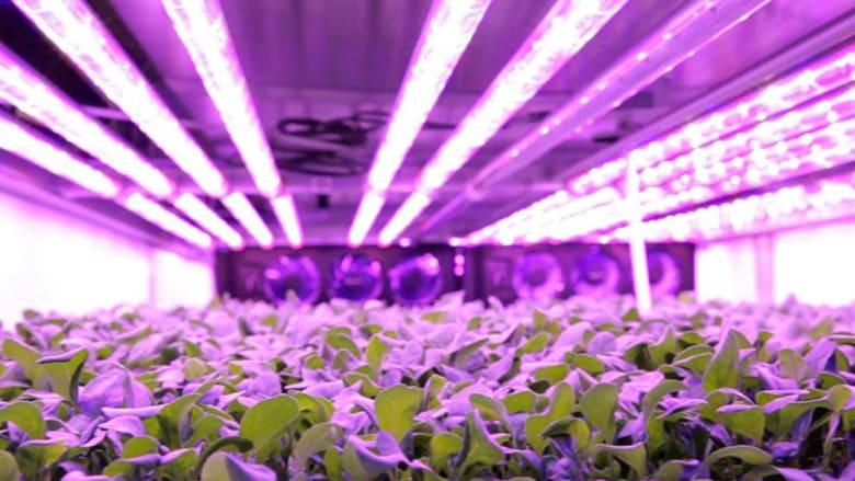 هذه النباتات تنمو بلا أشعة شمس ومياه وتربة..اكتشف سرها
